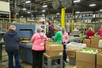 8pm -8am *Night Shift* Production Line - Production Packaging