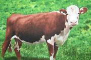 Cow Fabric
