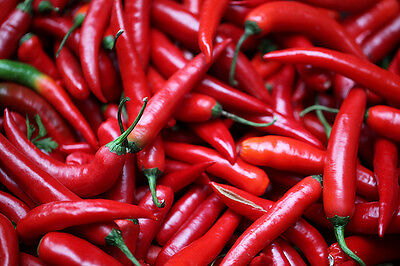 Land of Chiles