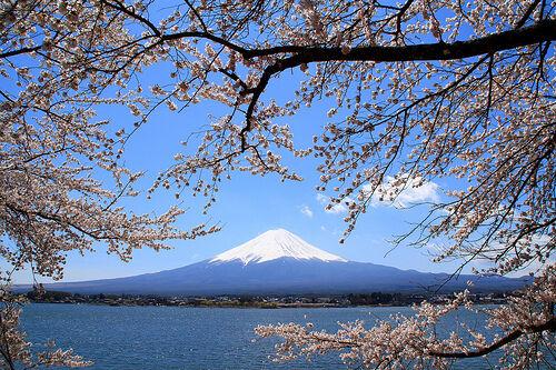kurumi camera japan