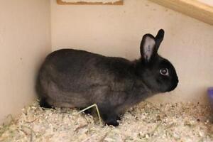 "Adult Male Rabbit - Bunny Rabbit: ""Cappuccino"""