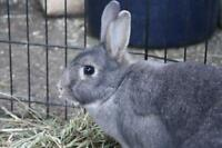 "Young Male Rabbit - Bunny Rabbit: ""Beech & Hickory"""