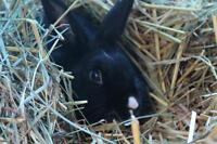 "Adult Female Rabbit - Bunny Rabbit: ""Vixie"""