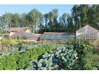 Cook needed to prepare produce from organic walled garden