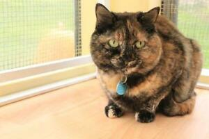 "Adult Female Cat - Tortoiseshell: ""Meggie"""