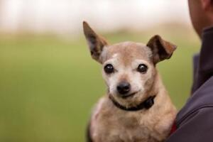 "Senior Female Dog - Mixed Breed: ""Ruby"""