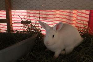 "Young Female Rabbit - Bunny Rabbit: ""Birch, and Aspen"""