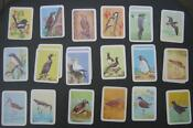 Tuckfields Bird Cards