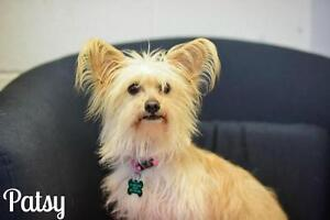 "Adult Female Dog - Terrier: ""Patsy"""