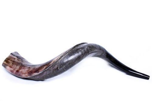 yemenite shofar ebay