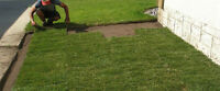 Brass Knuckle Contracting - Landscaping - SOD $0.85