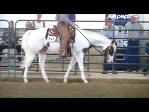 Thats How We Do It - 4 yr old APHA BT gelding - shown with pts.