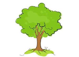 Fast Growing Hybrid Poplar Trees For Sale