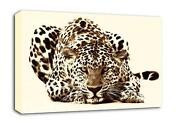 Leopard Print Canvas