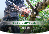 Tree Services - Lot Clearing & More