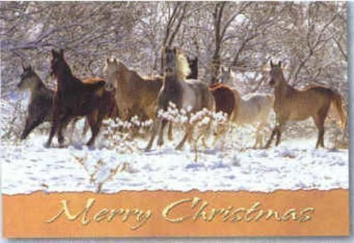Xmas Cards HORSE HERD Snow Scene Holiday Cards 10 per box