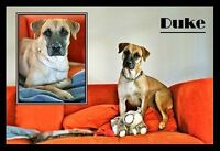 HANDSOME DUKE IS LOOKING FOR A FAMILY TO LOVE