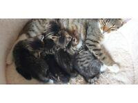 5 Beautiful Kittens!