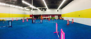 Agility Classes Starting In June - South Calgary Indoor Facility