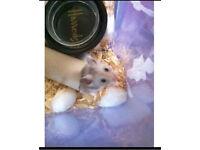 Libel mild mannered ROYAL FLUFFY the hamster 07496242005