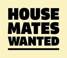 HOUSE MATE WANTED Maroubra Eastern Suburbs Preview