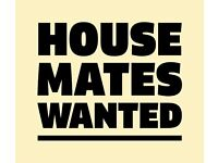 Looking to form a creative house in Bristol ASAP - buddy up - flatshare - house mates - lets do it!