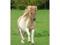 Three Little ponies :-)
