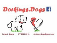 Pet services, walking, sitting, feeding etc. for all animals