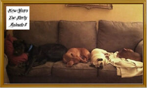 Dog Sitting (In Our Home) No Kennel Winnipeg Manitoba image 8