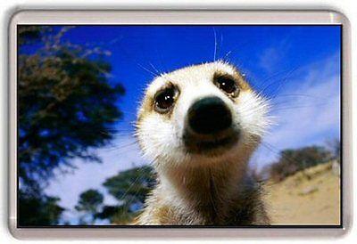 Meerkat ,cute Fridge Magnet 01