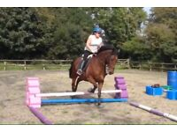 Horse for loan/share (Mylor area currently but to move to Carnon Downs)