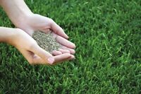 Spring Sale on Grass Seed