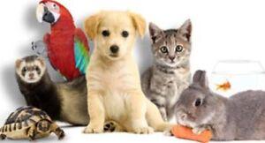 Gardienne d'animaux expérimentée à votre domicile