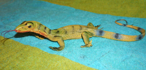 Desert Monitor Lizard Replica - Young Green - Realistic PVC