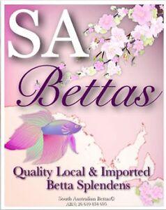SA Bettas & Aquatics  Dont Pay RRP Adelaide CBD Adelaide City Preview