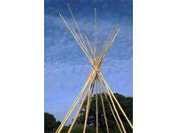 Tipi poles for sale