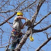 Capital arborist no job too big or small we do them all
