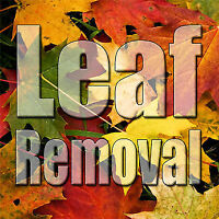Affordable Snow Removal Service Leaf Raking Yard Leaves Clean Up
