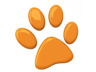 Pawtastic- friendly pet sitter/dog walker
