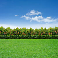 Lawn Cut And Trim $23.85+hst Affordable Lawn Care Pros