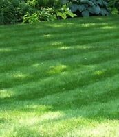 Lawn Cutting Services