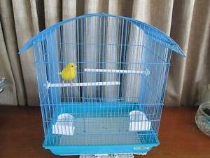 Canary in cage Strathpine Pine Rivers Area Preview