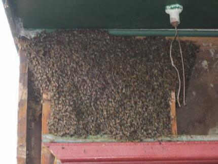 Bee swarm and wasp removal
