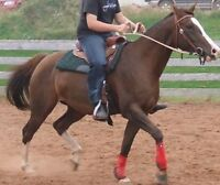 9 year old Paint/Arab mare