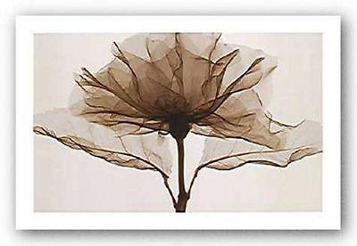 FLORAL ART PRINT A Rose Steven Meyers ()
