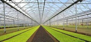 Diffused 8 mils Greenhouse Vinyl Poly Coverings