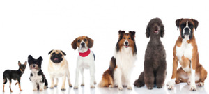 Are You Looking For A Dog Walker Who's #1 Priority...