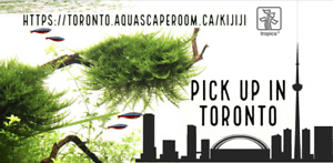Tropica Aquarium Plants in the GTA