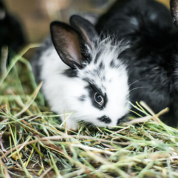Ratgeber: Worauf Sie beim Onlinekauf von Heu und Stroh für Kleintiere achten sollten