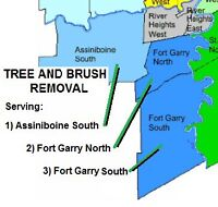 Economical Tree Cutting Removal Service!